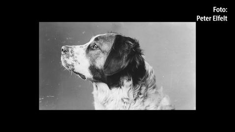 Thumbnail for entry Fotografiske fortællinger - Hunde og andre kæledyr